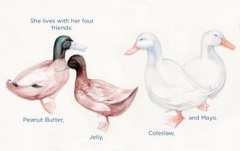 A watercolor illustration of four ducks, two brown Khaki Campbell ducks named Peanut Butter and Jelly, and two Pekin ducks named Coleslaw and Mayo